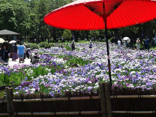 20140614 水元公園 03.jpg